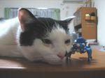 Cat_080905_6